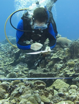 Kos_coral_survey_3_2